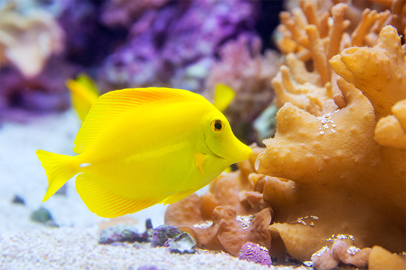 נעים-במים-דגי-נוי-מים-מלוחים1