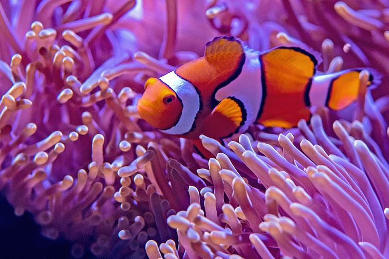 נעים-במים-דגי-נוי-מים-מלוחים15