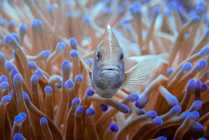 נעים-במים-דגי-נוי-מים-מלוחים16