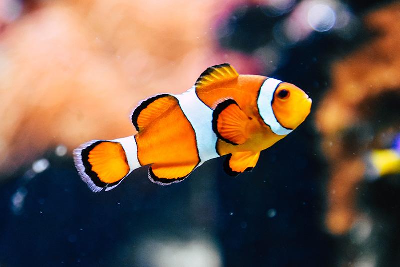 נעים-במים-דגי-נוי-מים-מלוחים18