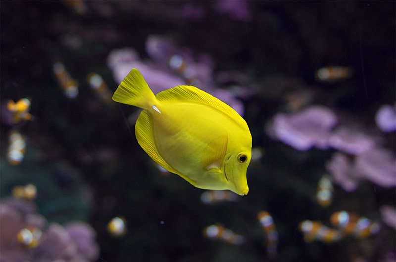 נעים-במים-דגי-נוי-מים-מלוחים3