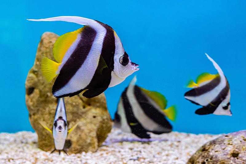 נעים-במים-דגי-נוי-מים-מלוחים4