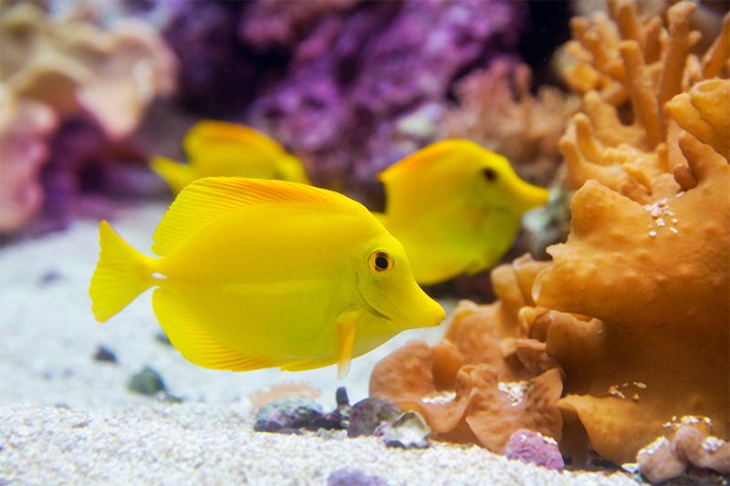 נעים-במים-דגי-נוי-מים-מלוחים6
