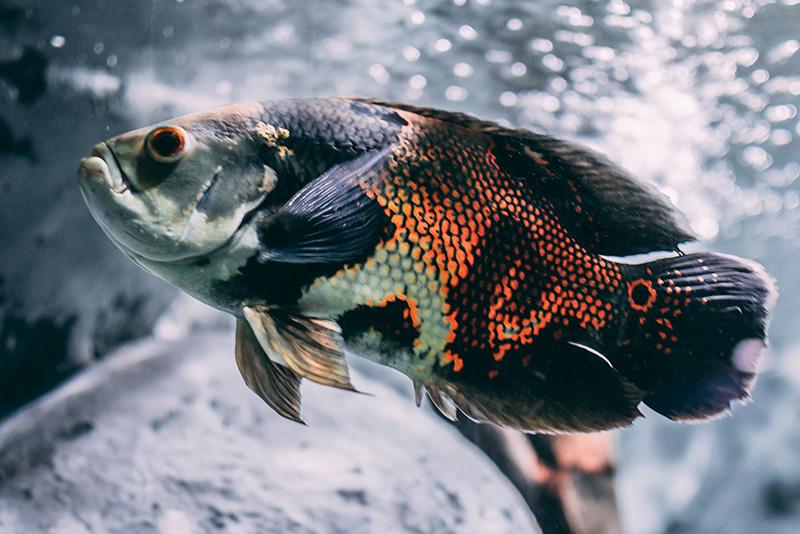 נעים-במים-דגי-נוי-מים-מתוקים1