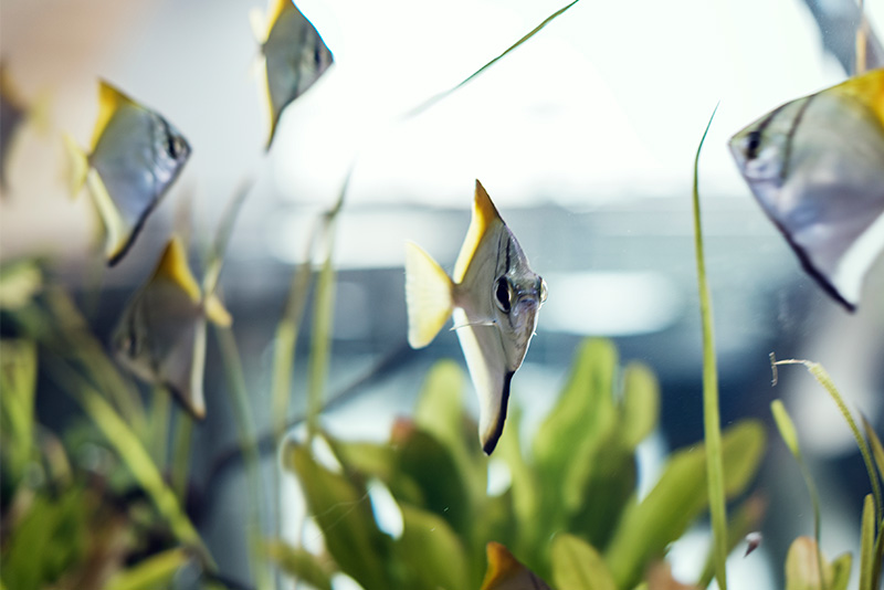 נעים-במים-דגי-נוי-מים-מתוקים11