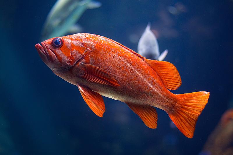 נעים-במים-דגי-נוי-מים-מתוקים13