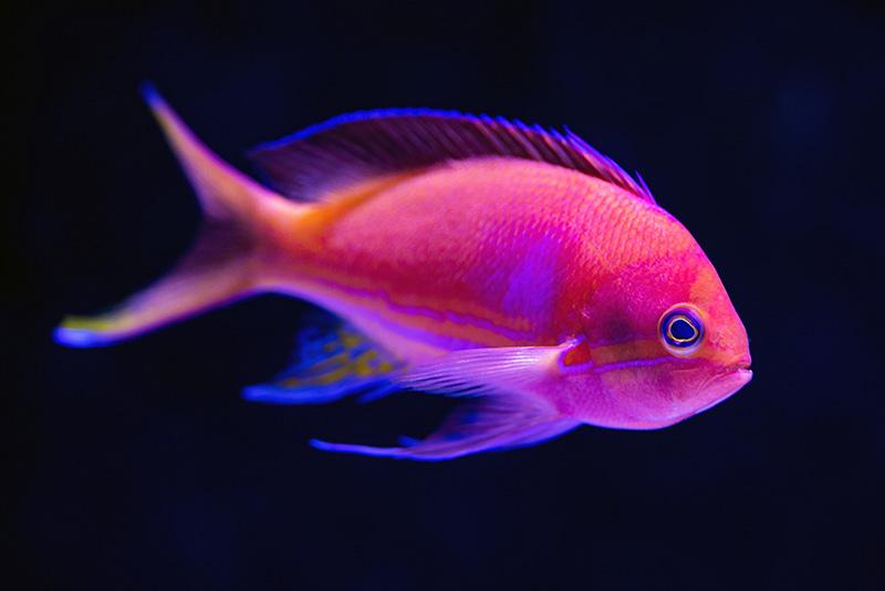 נעים-במים-דגי-נוי-מים-מתוקים17