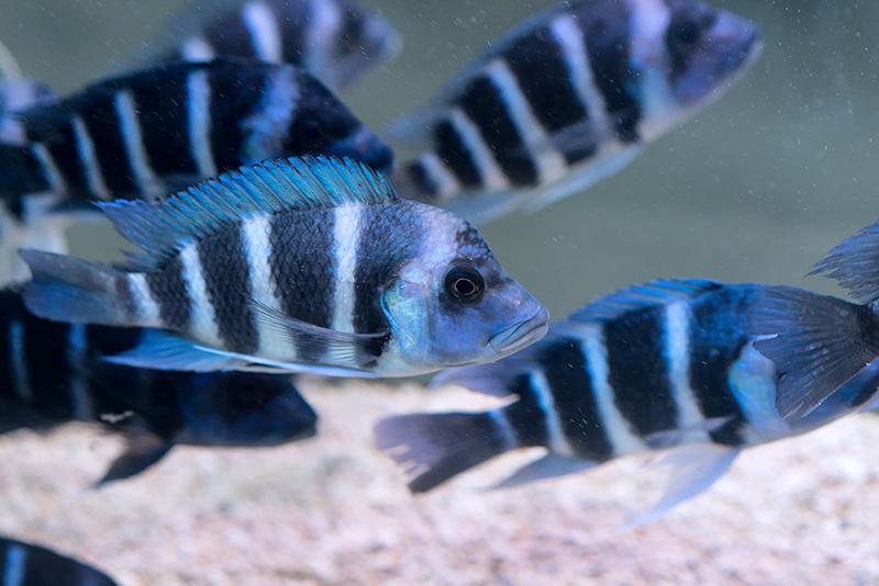 נעים-במים-דגי-נוי-מים-מתוקים22