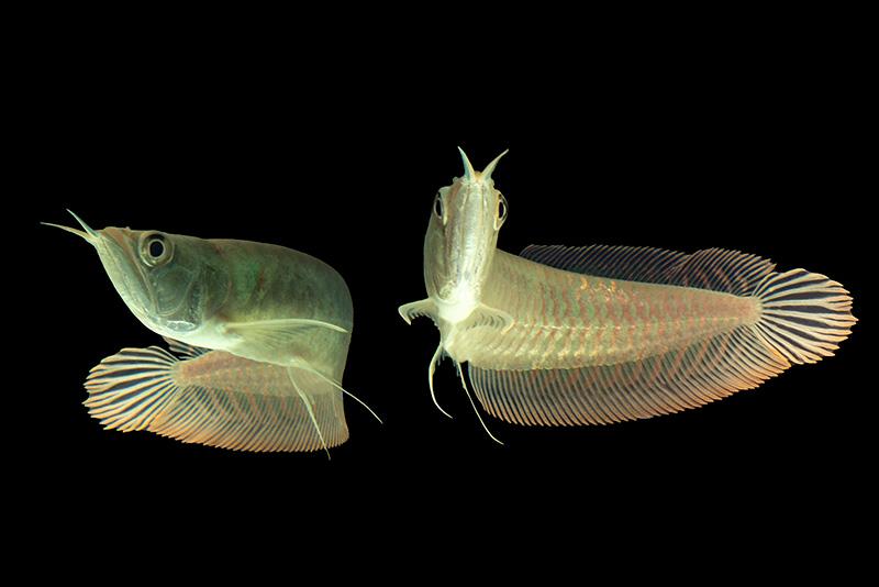 נעים-במים-דגי-נוי-מים-מתוקים5