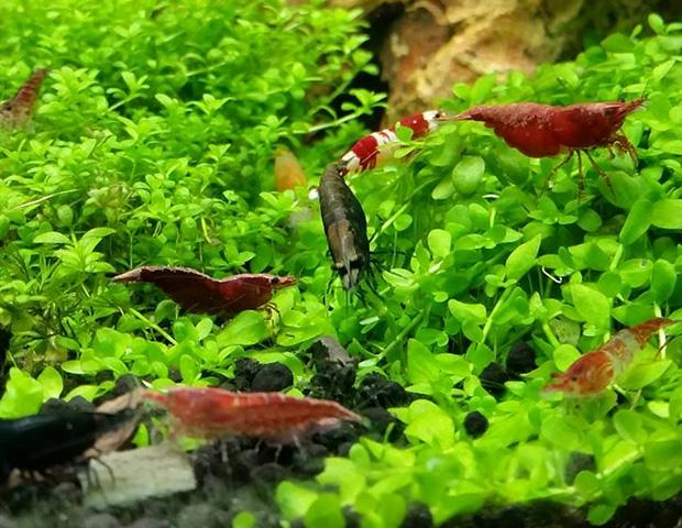 aquarium-plants34