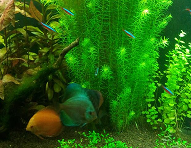 aquarium-plants38