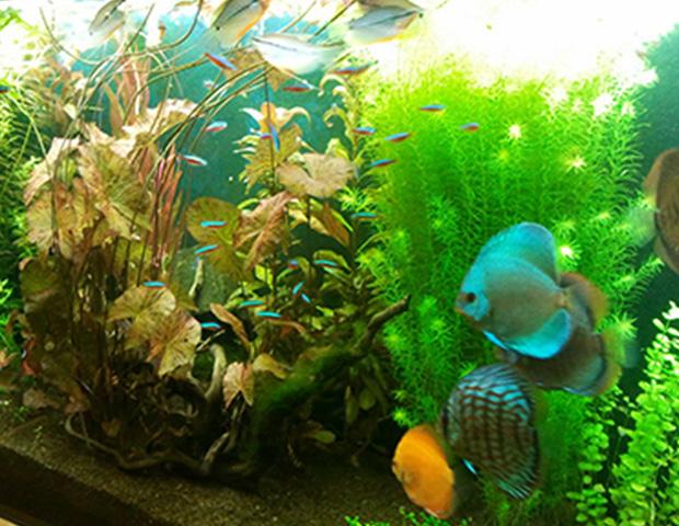 aquarium-plants39
